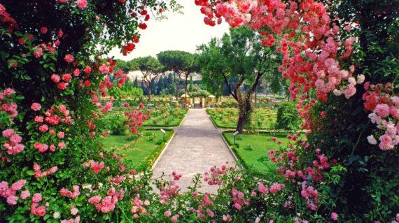 розовый сад рим