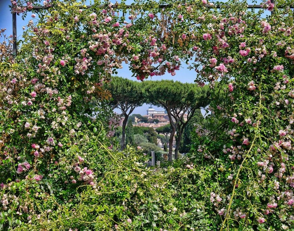 розовый сад в риме
