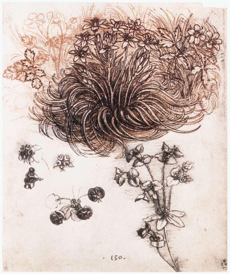Звезда Вифлеема и другие растения, ок. 1505-1507 гг.