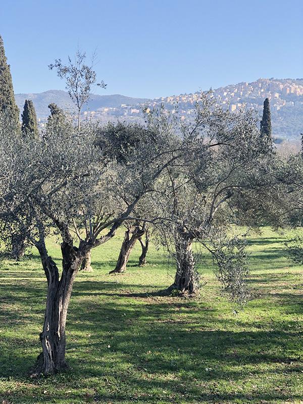 Тиволи в окружении оливковых рощ