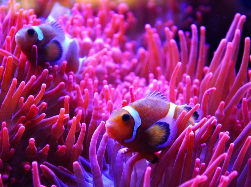 Тропические рыбки в Аквариуме Генуи